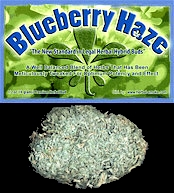 Hybrid Bud BlueBerry Haze Legal Bud